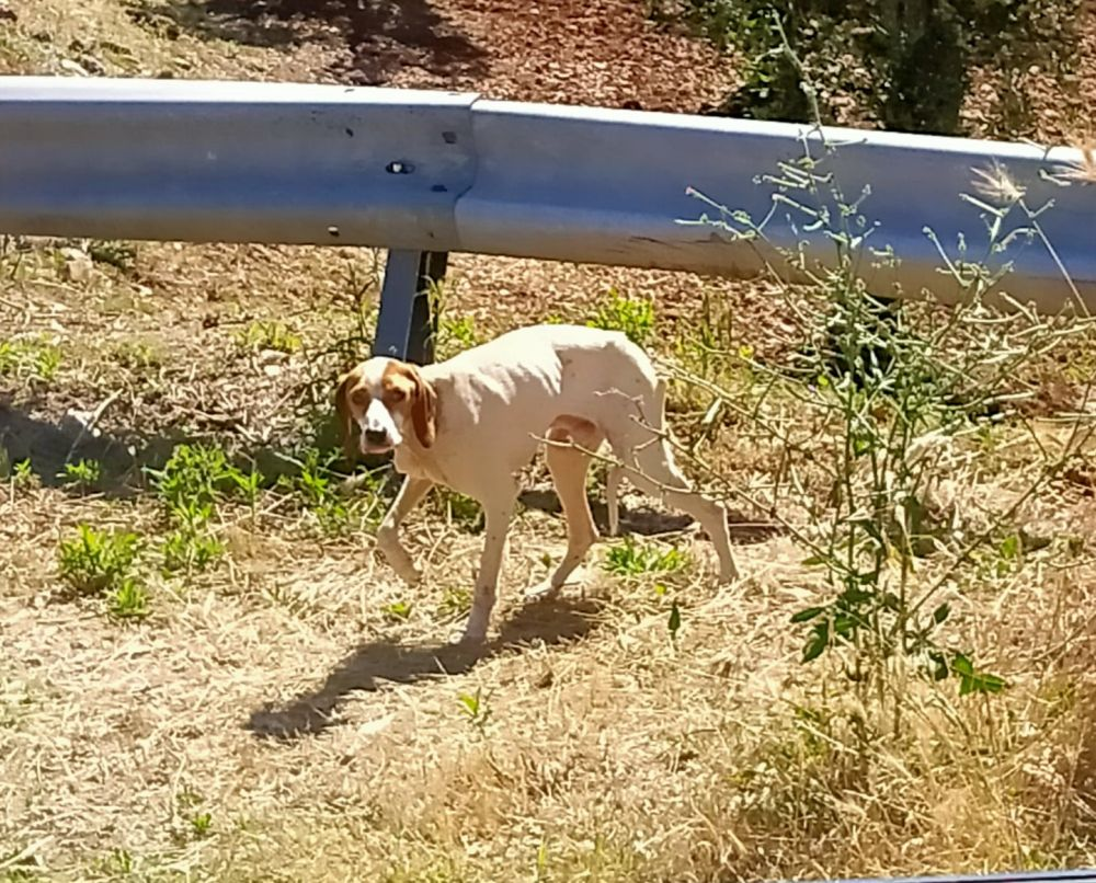 Kraft für Tiere - Straßenhunde Spenden